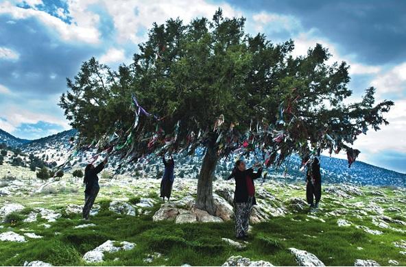 Akça Aüaç Hayat aüacı süslemesi Türklerde yeni yıl ağacı süslemesi